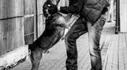Schronisko dla Zwierząt - akcja zachęcająca do czipowania zwierząt